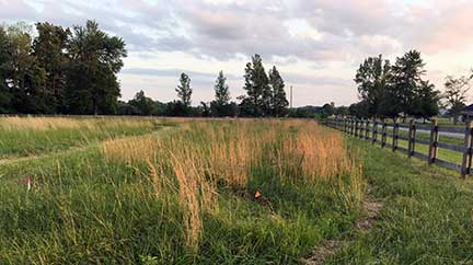 The Motherhouse's 3-acre Nature Preserve Cemetery meadow was planted with four kinds of milkweed.