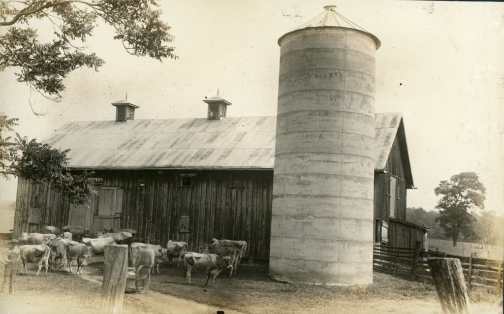 Historic photo of a barn and cows at the Motherhouse