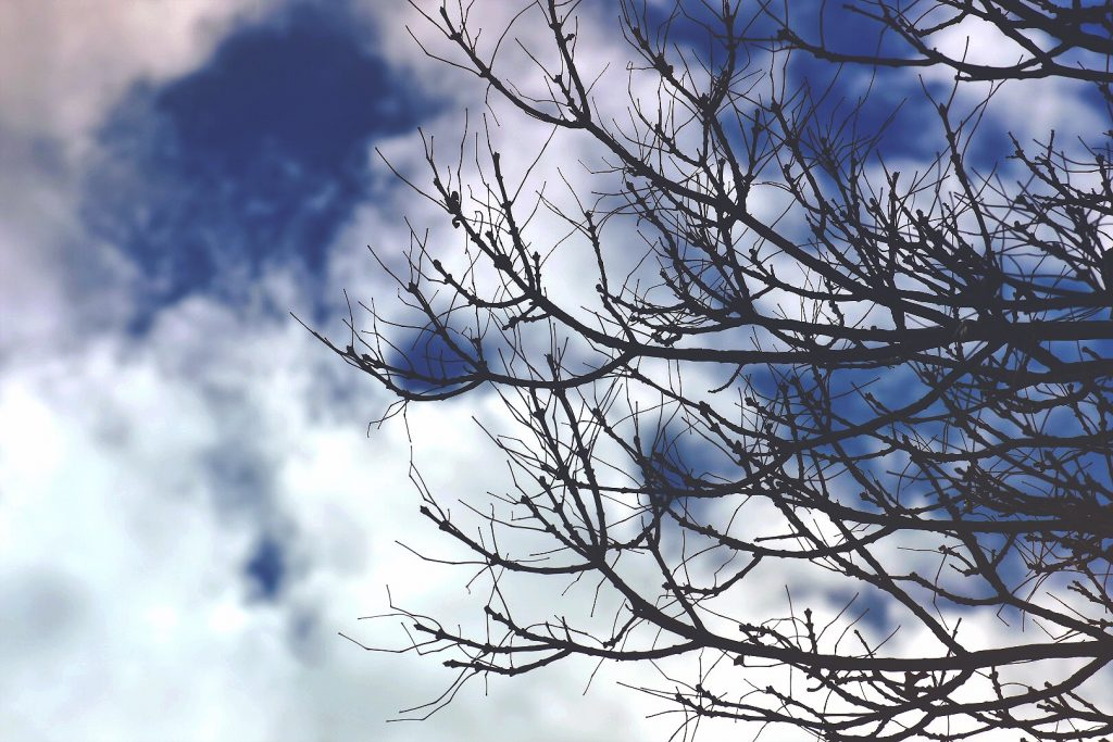 tree branches are profiled against a blue and white sky