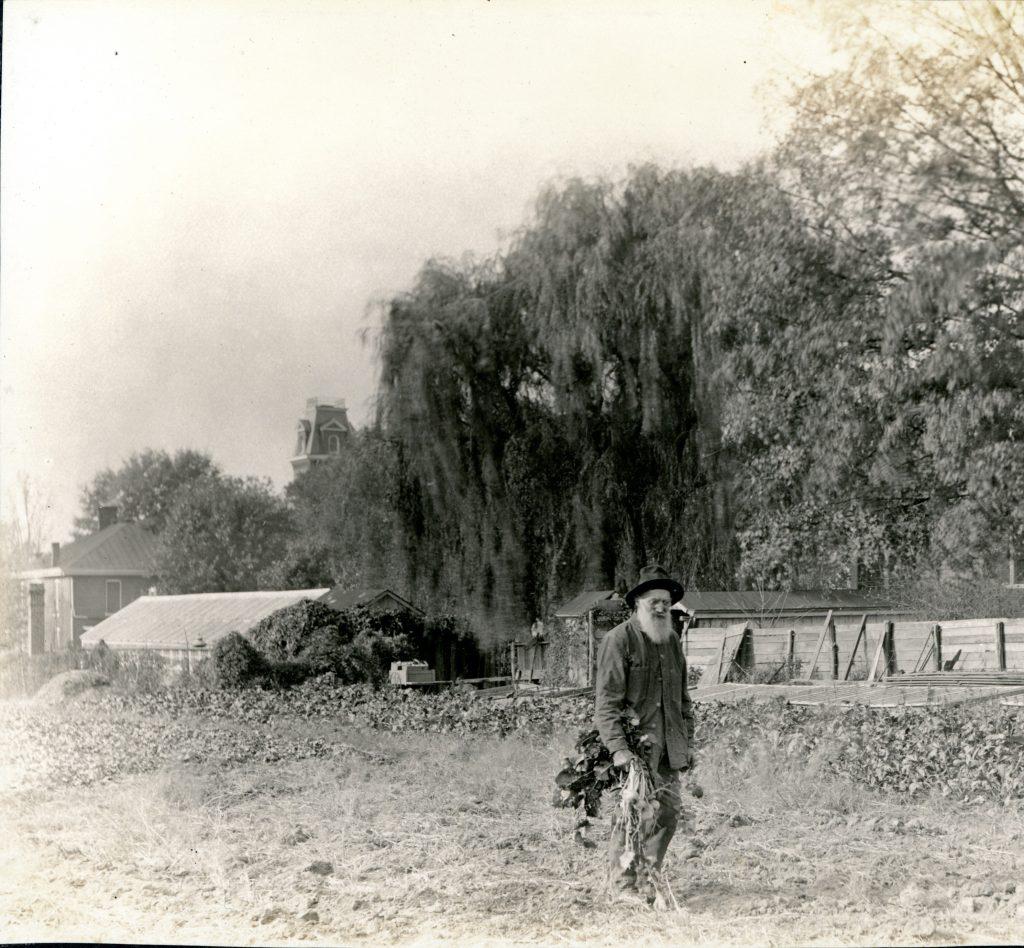 Vintage photo of man gardening