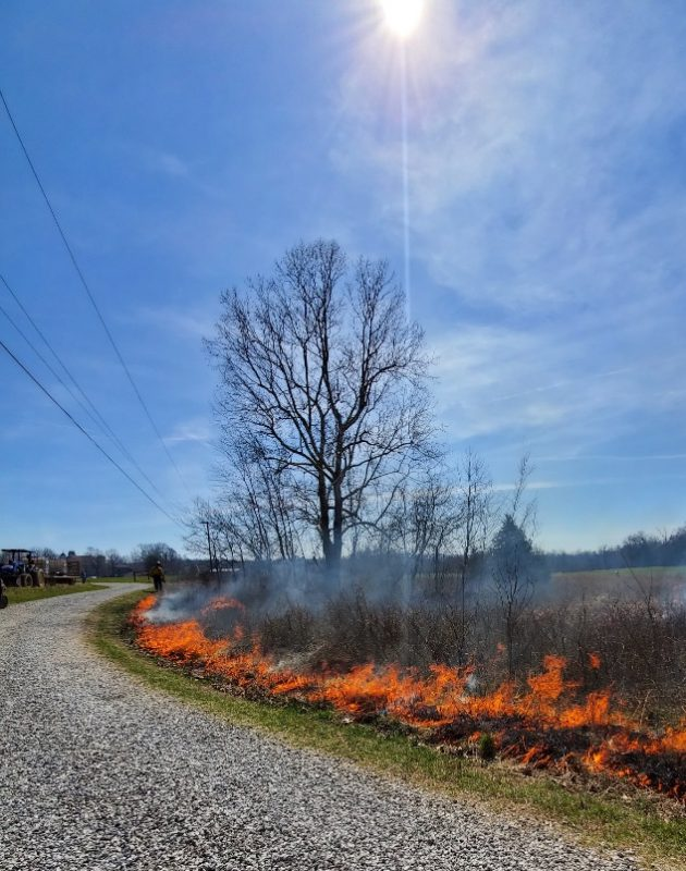 A line of fire burns the grass along the edge of a gravel road.