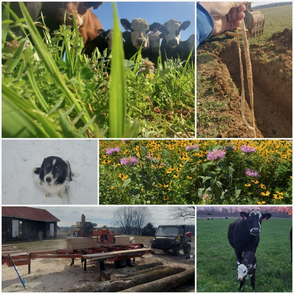 Scenes from around a farm, including a dog, cow and calf, cows, flowers for pollinators and machinery.