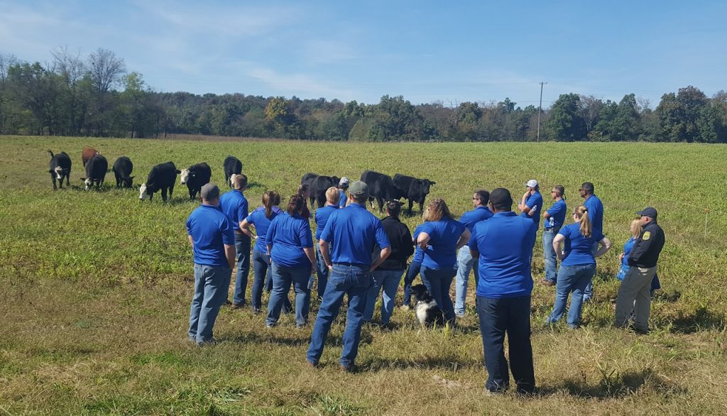 Group of people in blue shirts study cows grazing in the field.