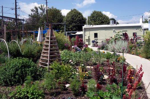 A well-tended garden with a sidewalk running past it.