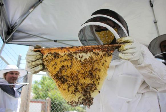 A person in full beekeeping protective gear holds up a fresh comb of honey.