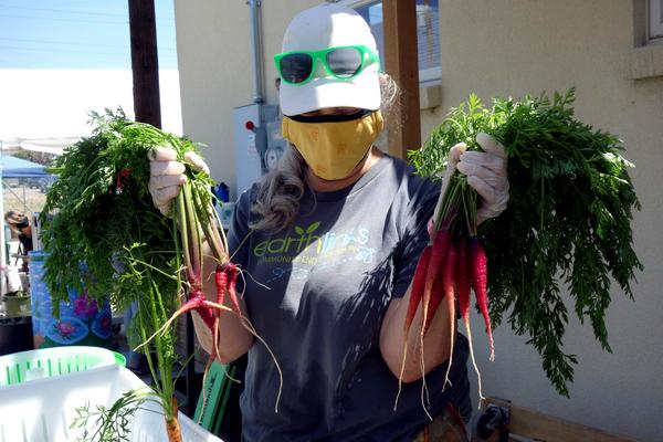 A person holds up two handfuls of fresh carrots.