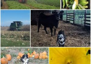 General Farm Collage