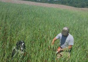 Sampling Cover Crop Biomass sq