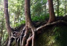 Trees-Classen-Article-Color-Editsquare